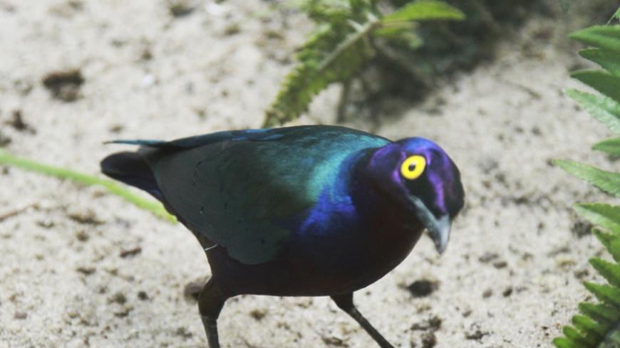 Ирландские экологи заявляют, что съемки «Звездных войн» мешают птицам