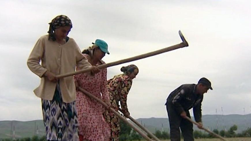 Продукция на экспорт: в Кыргызстане начались весенне-полевые работы