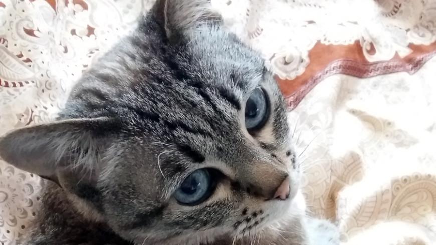 Кошка-золушка стала принцессой