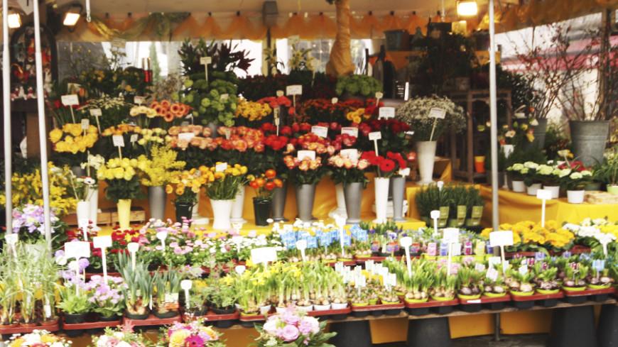 Россельхознадзор приостановил сертификацию цветов из Голландии