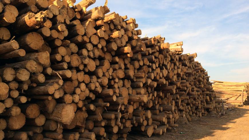 Америка и Европа размышляют, топить ли им дровами