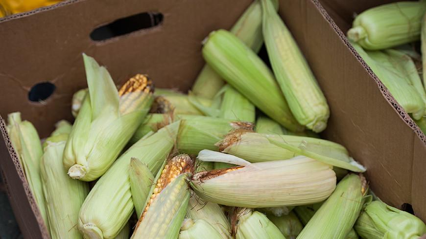 ФАС предложила ограничить экспорт ржи, ячменя и кукурузы