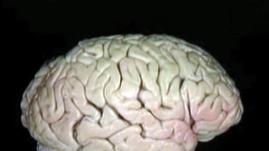 Ученые: Каждый вечер мозг усыхает