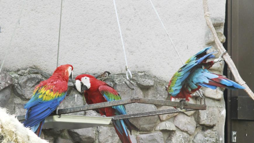 Кеша хороший: в Ботаническом саду Минска поселились попугаи