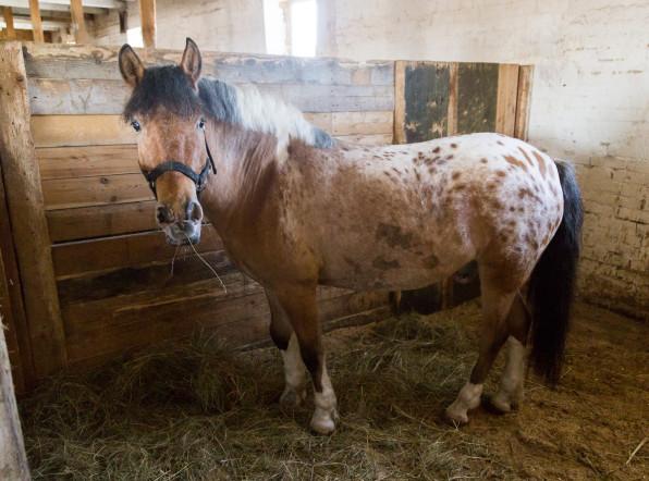 Американка создала лошадиный рай в деревне под Брянском