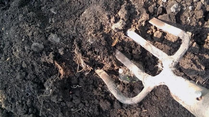 Уральский дачник нашел в огороде кости мамонта