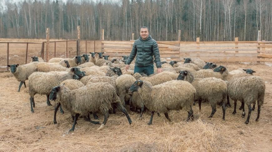В Грузии туристам предложили пасти скот, чтобы «разгрузить» пастухов