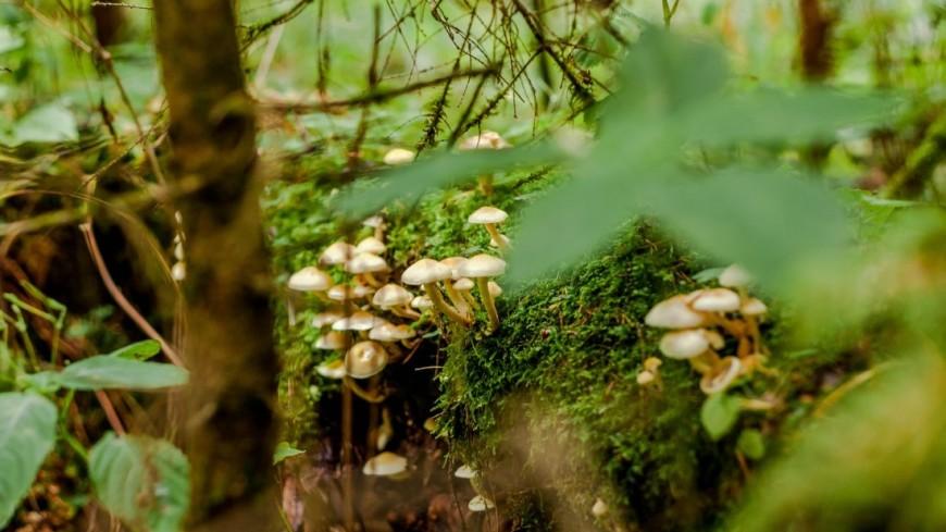 "Фото: Марина Дыкун (МТРК «Мир») ""«Мир 24»"":http://mir24.tv/, поганки, грибы, лес, гриб"