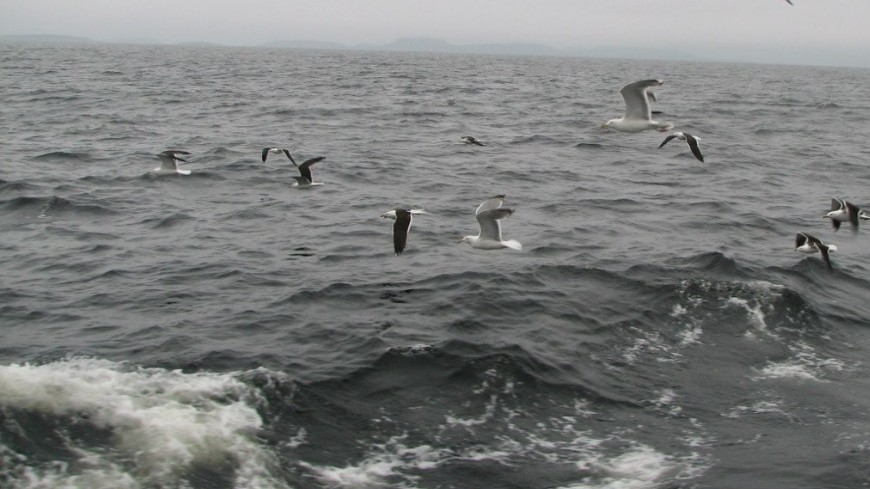 "Фото: Елизавета Шагалова, ""«Мир 24»"":http://mir24.tv/, утонул, белое море, море, чайки"
