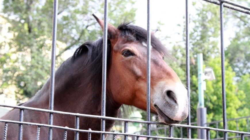 ВЕАО конь закусал человека досмерти