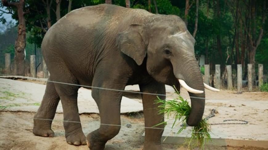 Слон в Эфиопии бивнем убил туриста