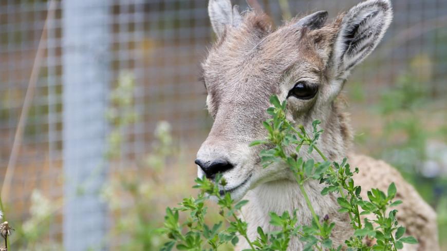 Забавные и редкие: кто обитает в закрытом питомнике Московского зоопарка