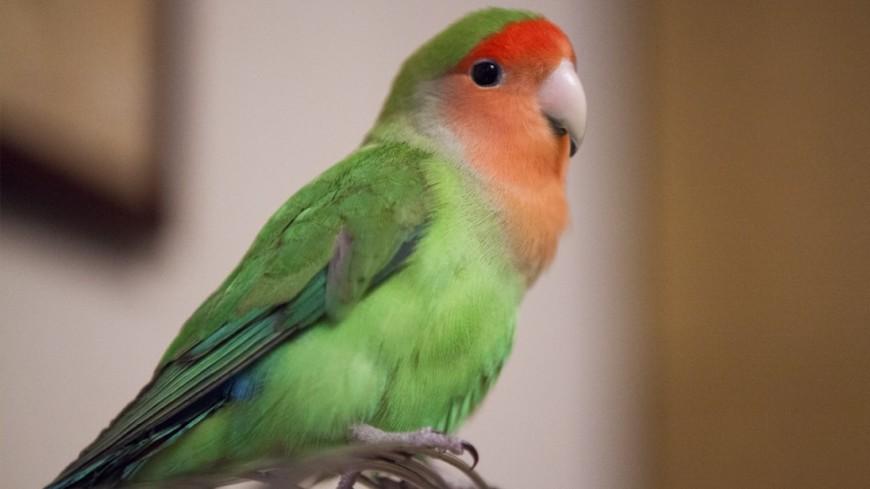 Суд США признал американку виновной вубийстве мужа после «показаний» попугая