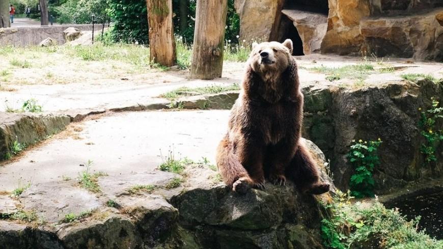 "Фото: Елизавета Шагалова, ""«МИР 24»"":http://mir24.tv/, зоопарк, медведь"