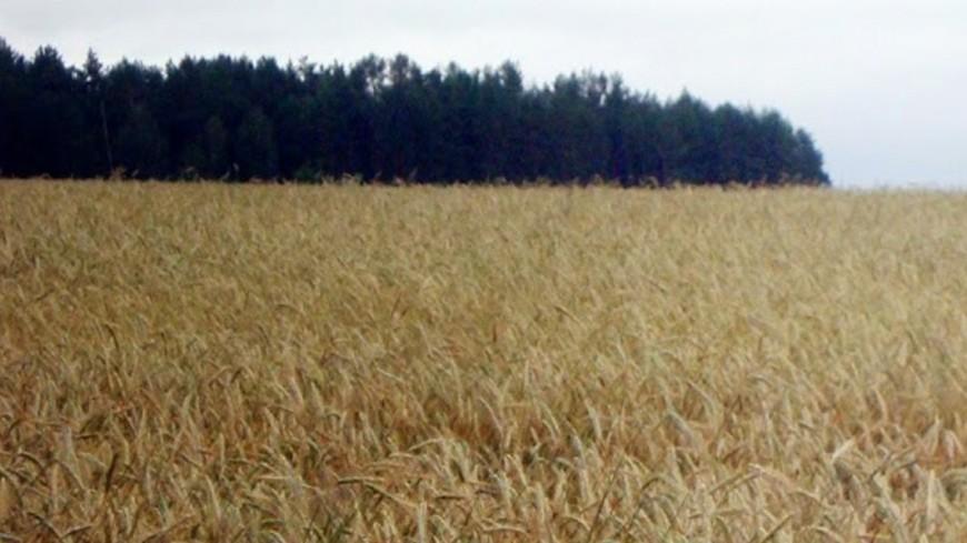 РежимЧС ввели вЧувашии из-за угрозы погибели урожая