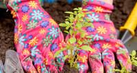 Физик из Франции занялся в Армении альтернативным садоводством