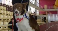 Собака-мэр рассказала о своих планах на посту президента США