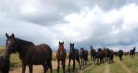 Девушка-парикмахер в Беларуси завела табун из 18 лошадей