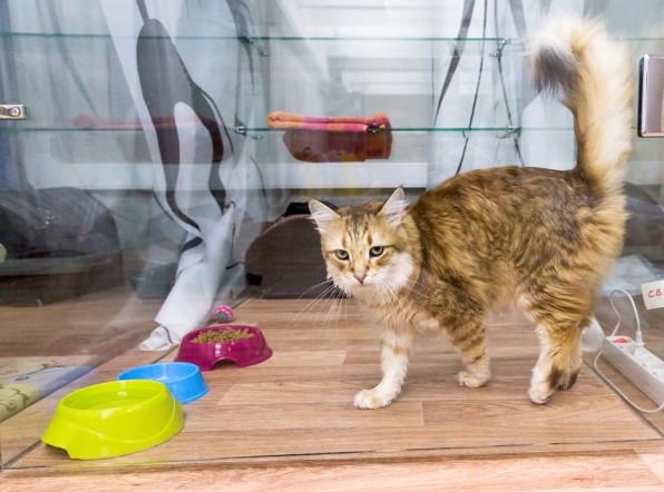 О чем говорит хвост: ученые систематизировали язык тела кошек