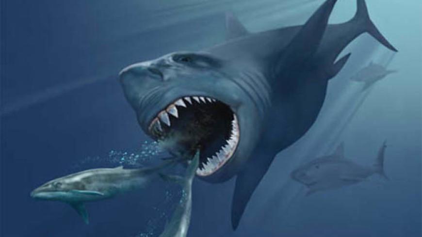 Ученые выяснили, почему вымерла гигантская акула