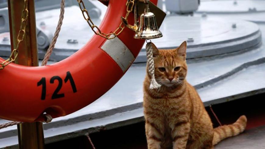Кот, который к Сирии плавал: Минобороны показало фото полосатого моряка