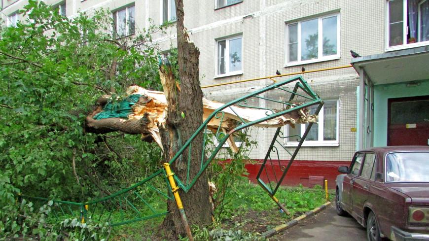 Собянин пообещал устранить последствия урагана-убийцы за два дня