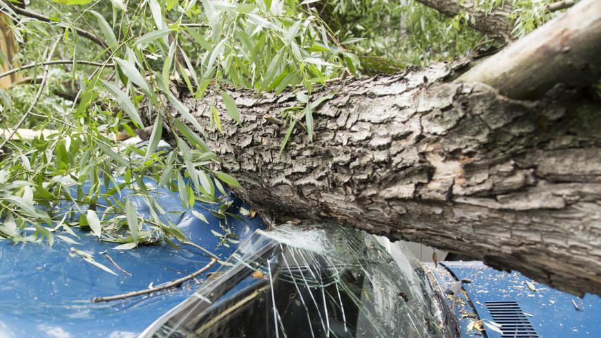 Света нет, деревья вырваны: Молдову атаковал «оранжевый» ветер