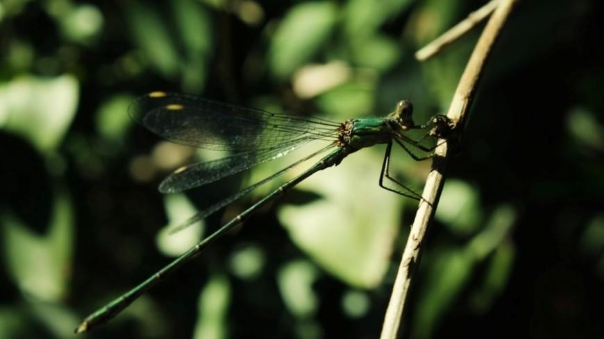 У насекомых «стадное чувство» убивает интеллект