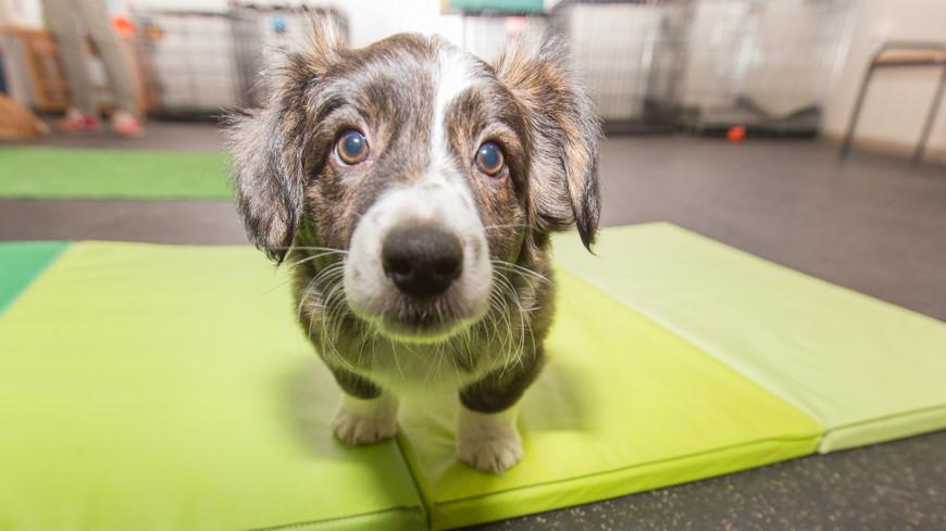Спасатели нашли трех щенков под завалами гостиницы в Италии