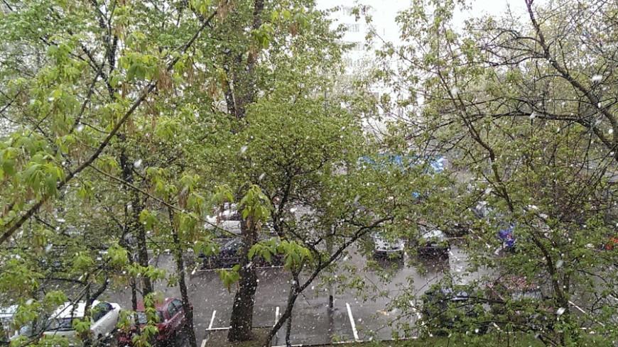 В Тверской области в середине июня выпал снег