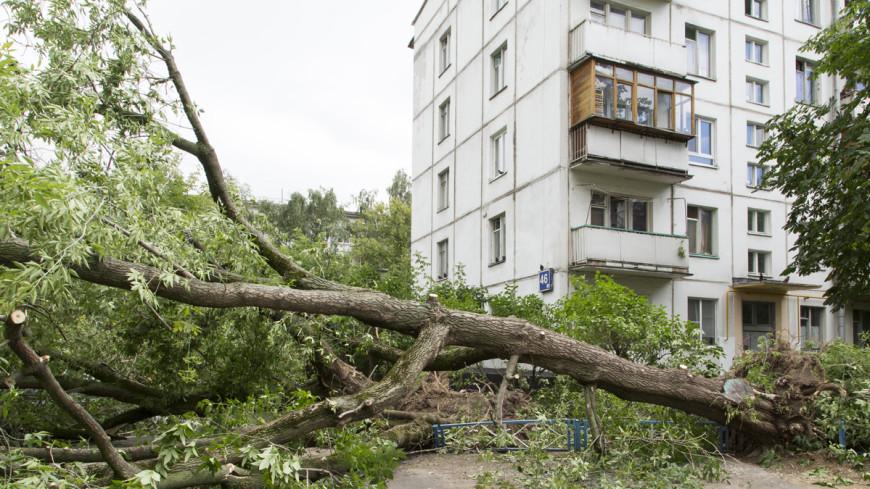 Смерч в Сыктывкаре обрушил строительный кран и вырвал деревья