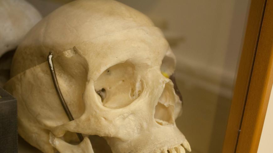 Ученые раскопали стену из черепов в историческом центре Мехико