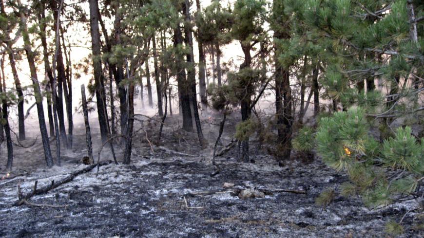 Рядом с крупнейшим нацпарком Грузии разгорелся пожар
