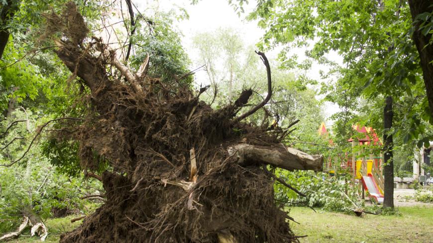 Пали вековые сосны: Ставрополье и Карачаево-Черкесию потрепал ураган