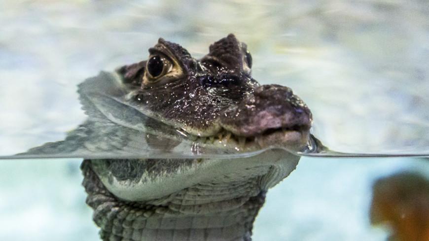 Чуда не произошло: идущего по воде священника съели крокодилы