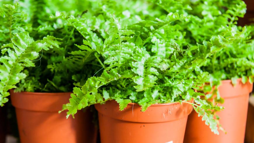 Растения могут предупреждать друг друга об опасности