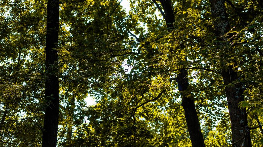 Мужчина 8 дней блуждал по тайге, питаясь шишками и согреваясь листьями