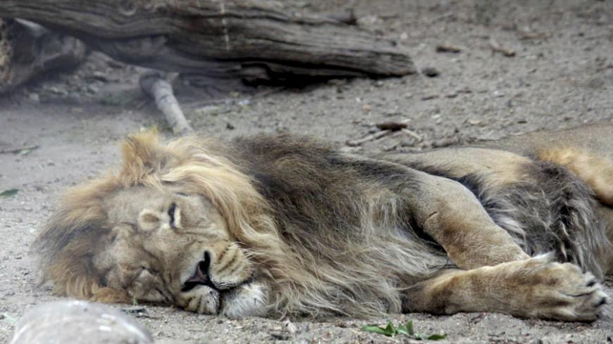 В Комсомольске-на-Амуре сгорели все обитатели местного зоопарка
