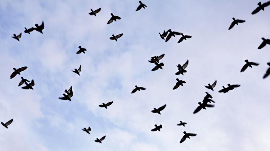 Стая птиц повредила пассажирский самолет в небе над США