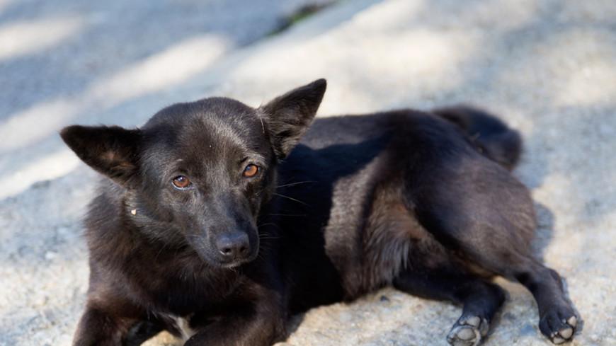 Зоополиция встанет между догхантерами и бездомными животными