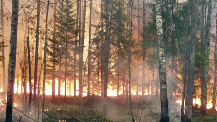 На Чукотке из-за пожаров ввели режим ЧС