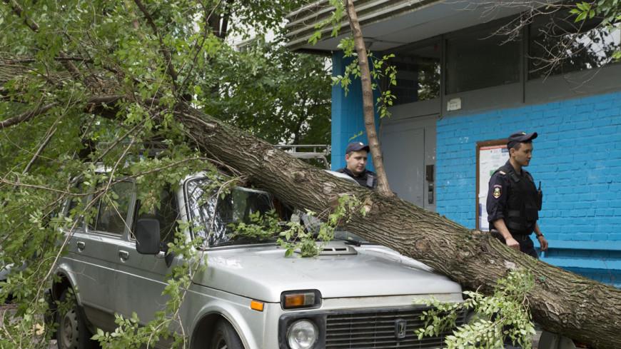 Пронзительный ветер: штормовое предупреждение объявили в Москве