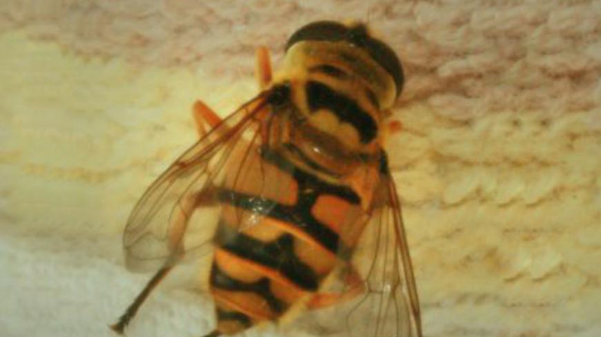 Британские ученые опасаются за пчел