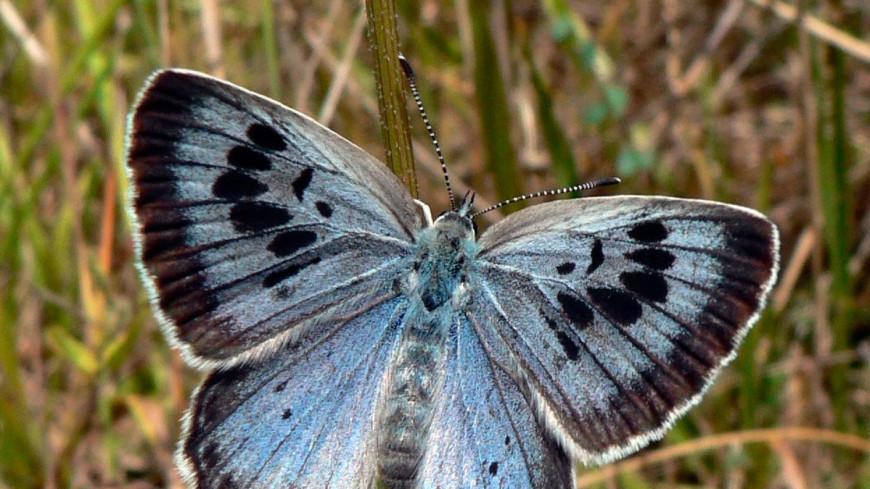 Энтомолога из Бристоля признали виновным в убийстве бабочки