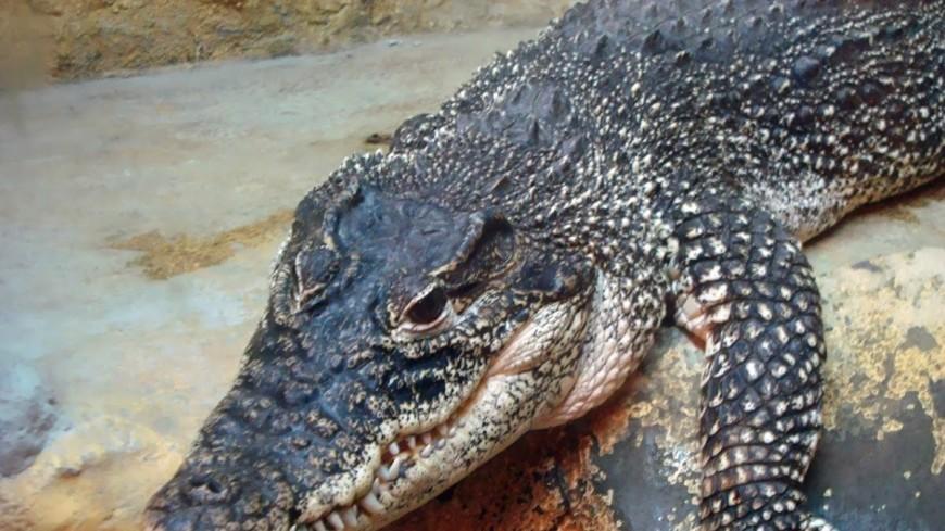 Рыбак отомстил крокодилу за смерть жены