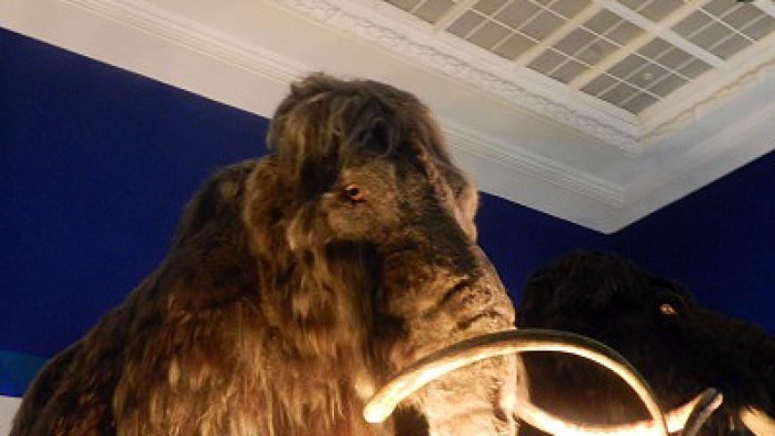Останки мамонтенка нашли в Иркутской области