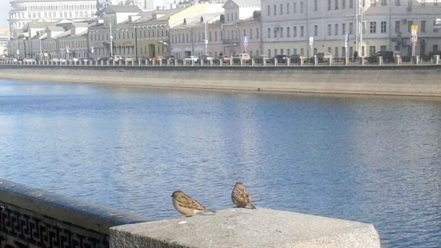Cотрудники экстренных служб оказали помощь мужчине, прыгнувшему степлохода вМоскву-реку