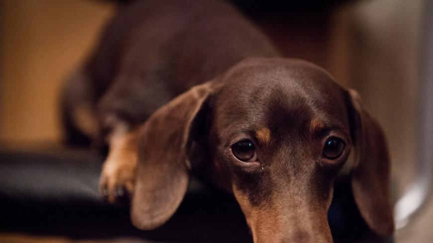 Собачий этикет: как отучить питомца спать с хозяином