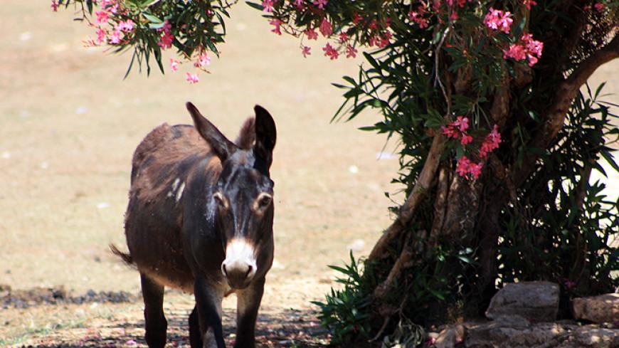 В Колумбии началась программа по обмену лошадей и ослов на автомобили