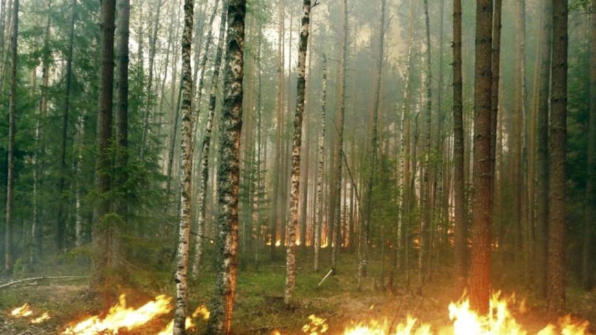 В Канаде из-за лесных пожаров эвакуировали 130 туристов